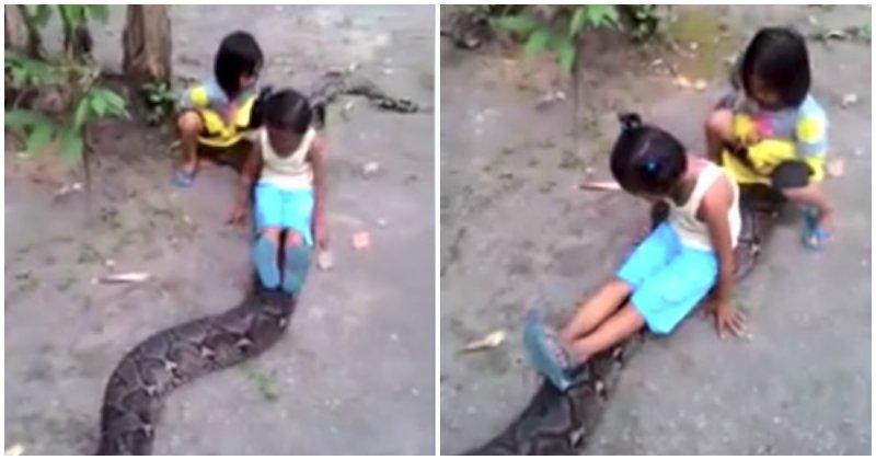 Маленькие девочки прокатились на  большом сетчатом питоне