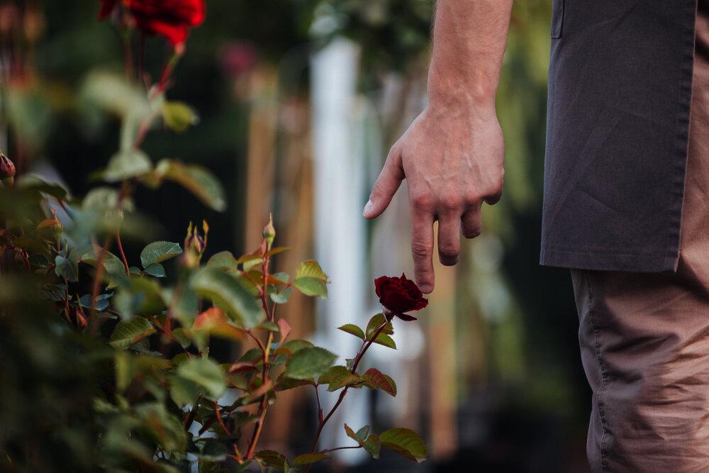 Мудрая притча о розах и колючках
