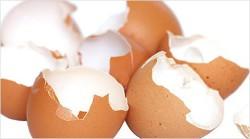 яичная скорлупа - источник кальция при остеопорозе суставов и костей