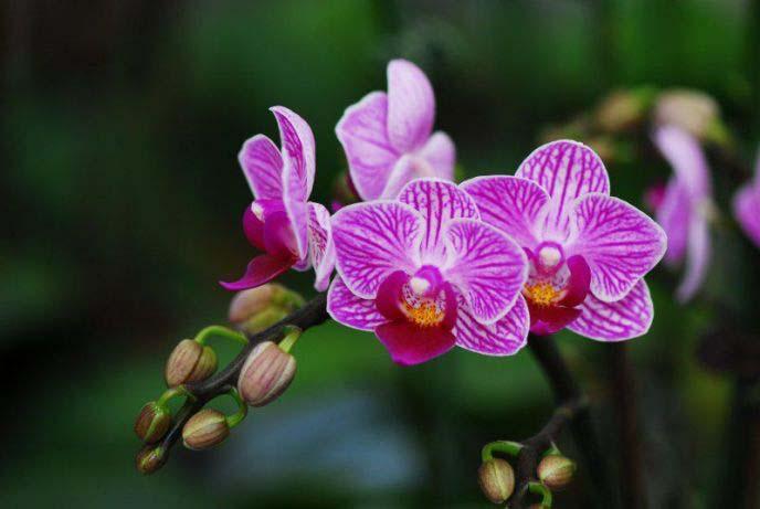 Как ухаживать за орхидеей Фаленопсис круглый год
