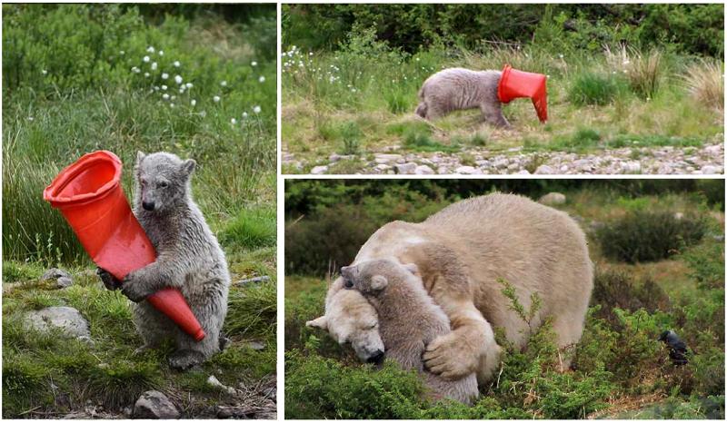 Вот такая игрушка у медвежонка