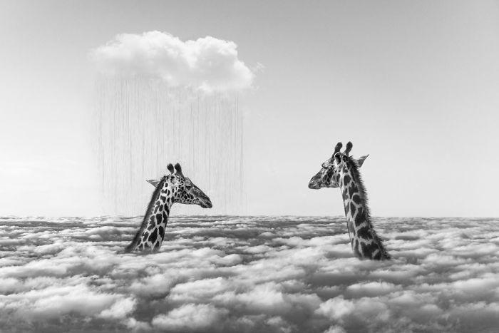 Художник показывает тайную жизнь диких животных, когда на них никто не смотрит