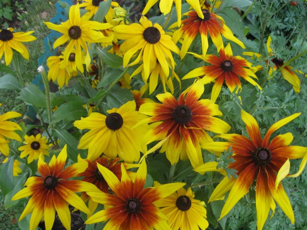 Страна трав и цветов country herbs and flowers
