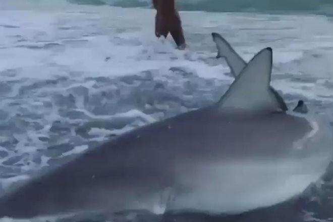 Девушка пришла на помощь акуле, которую выбросило на берег