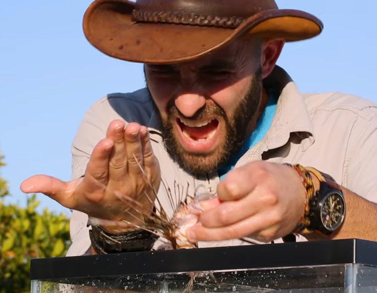 Как организм человека реагирует на укол ядовитой рыбы: видео