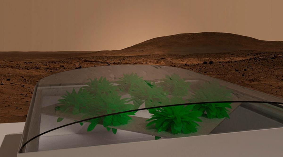Ученые вывели растения, способные выжить на Марсе