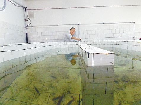 Серебрянные караси составляют треть всей рыбной биомассы