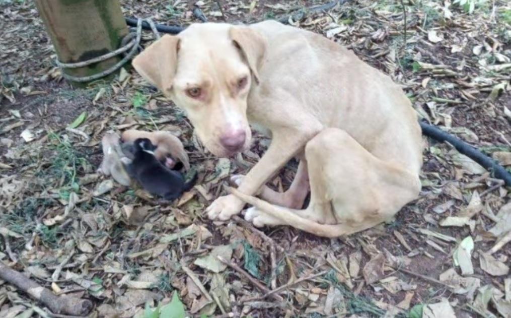 Ее беременную отвезли в лес и бросили без еды и воды...