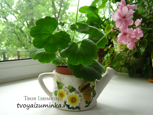 Любимые цветы в доме