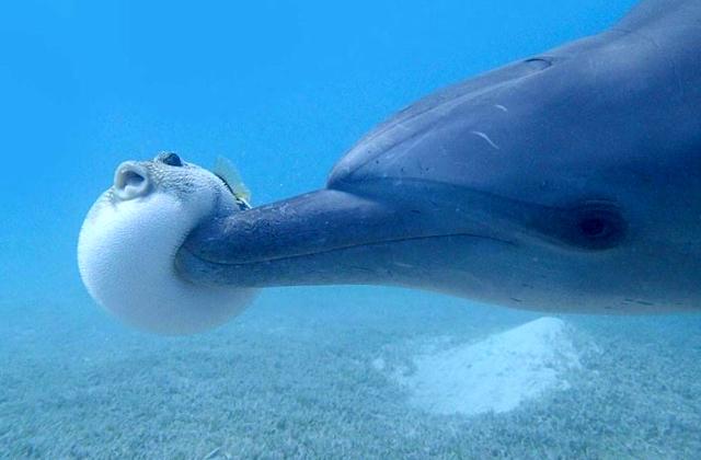 дельфин играет с рыбой