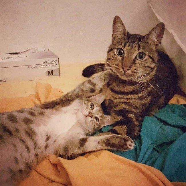 """7. Почти всегда зовешь котика как угодно, только не его """"настоящим"""" именем домашний питомец, животные, кот, прикол, юмор"""