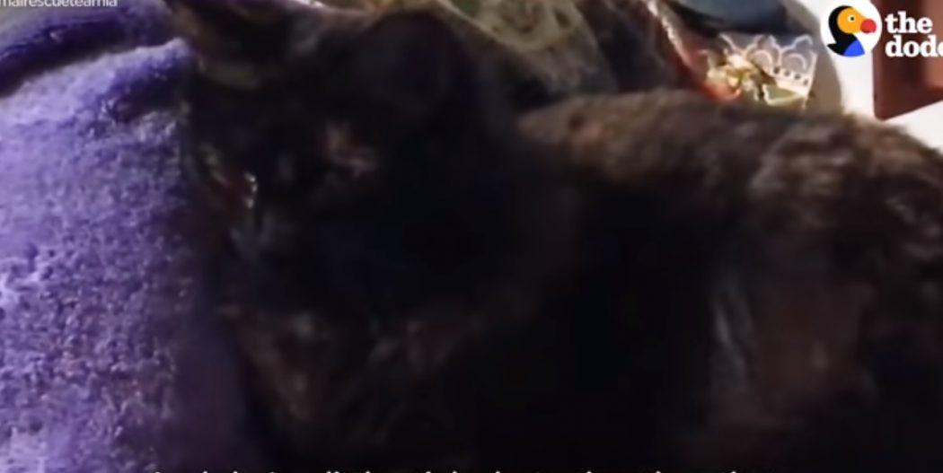 Эта кошка пробыла в ловушке под пристанью целых 7 дней!
