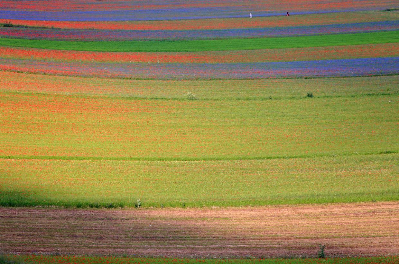Цветущая Италия