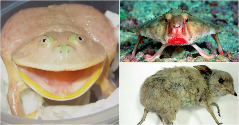 За что ученые так смешно обозвали этих животных? (16 фото)