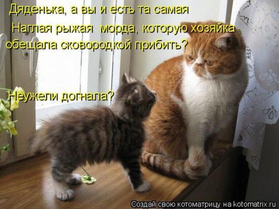 1359321581_96696261_large_1330447879__025 (570x427, 75Kb)