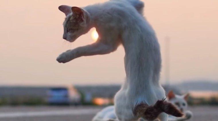 Японский фотограф доказал: коты — настоящие ниндзя (фотоподборка)
