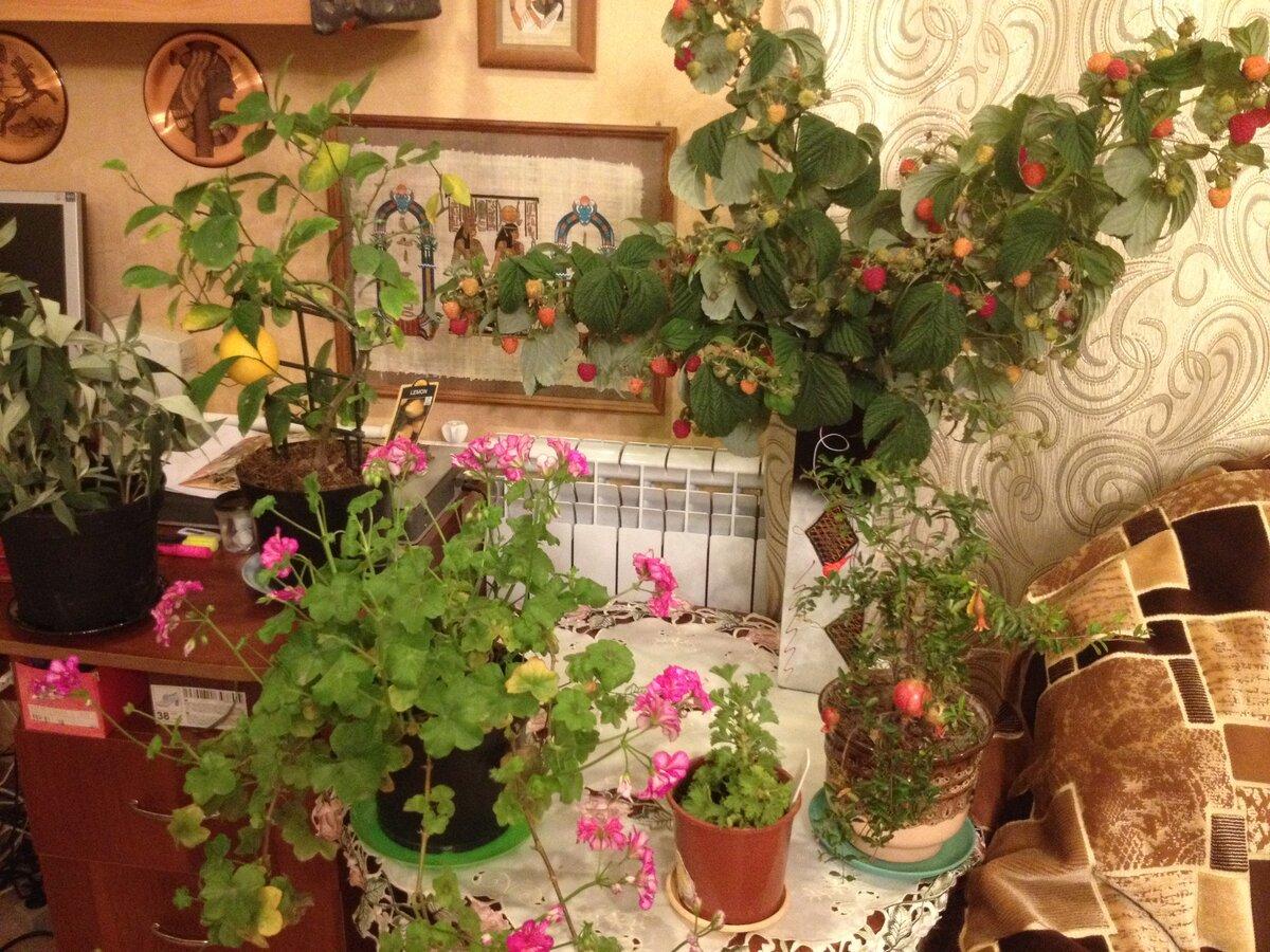 Ветки малины в вазе: сможет ли она дозреть дома? (Как она меняется за 5 дней)