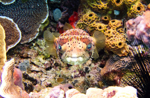 Появилась надежда на спасение умирающего Большого Барьерного рифа