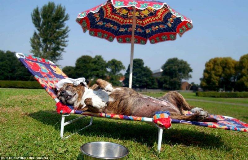 Как заботиться о домашних питомцах в жару