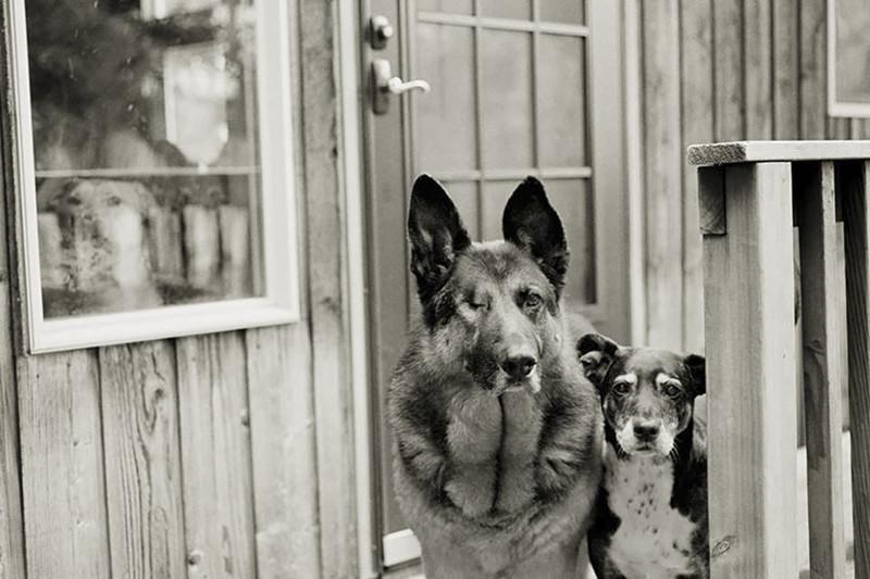Мейсон (12 лет) и Бейли (15 лет) собаки, фото собак, фотографии животных