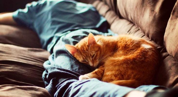 Почему кот спит на человеке:…