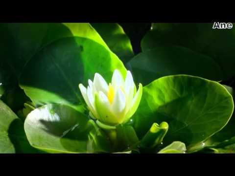 Relax-Цветы