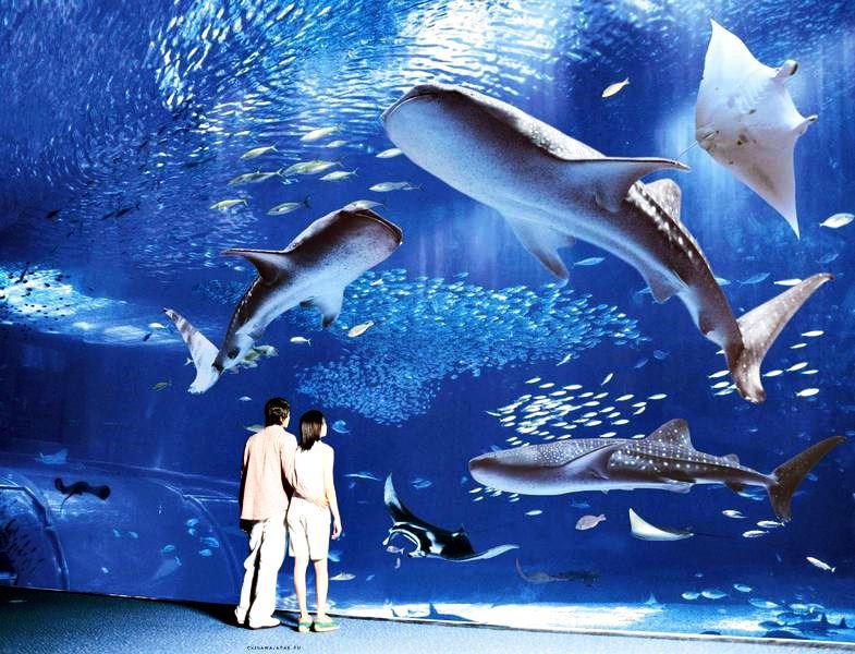Список самых популярных океанариумов мира