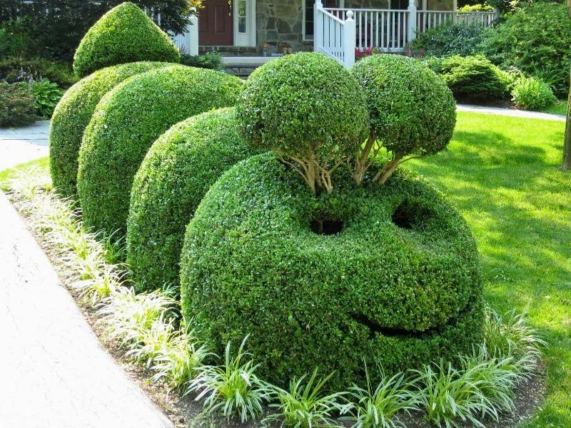Топиар — зеленое искусство фигурной стрижки