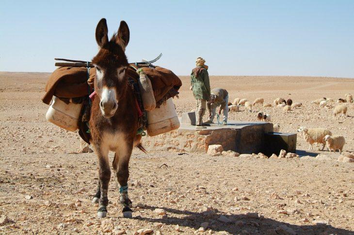 Уже не место для туристов: в Тунисе новые протесты из-за безработицы