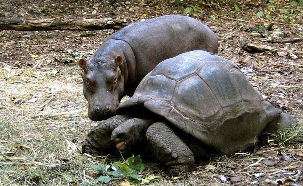 AnimalOddCouples 27 Самые странные парочки животных