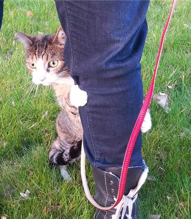 Коты в шоке: смешная реакция котов на первую прогулку за пределами дома