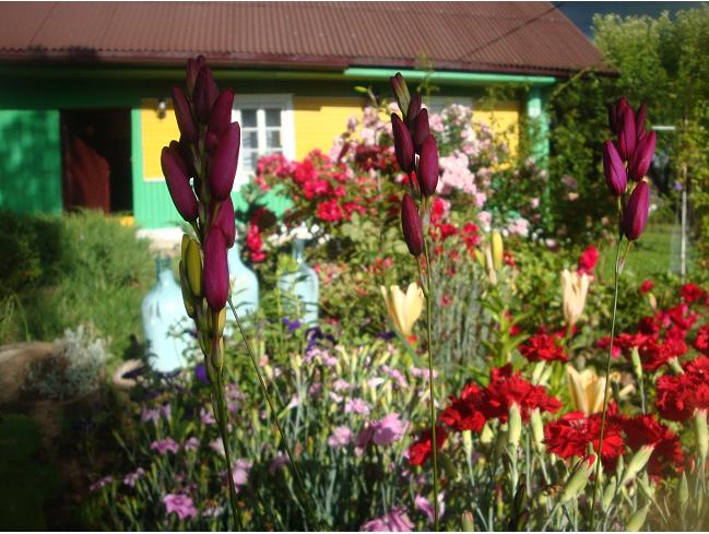 Семья купила старый деревенский дом на 26 сотках и создала ботаническое чудо