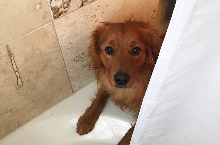 Хозяин рассказал о псе, который помогает ему пройти «мучительное испытание»
