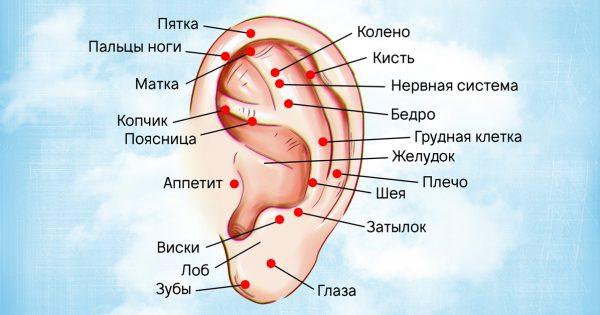 Вот как правильно делать массаж ушей