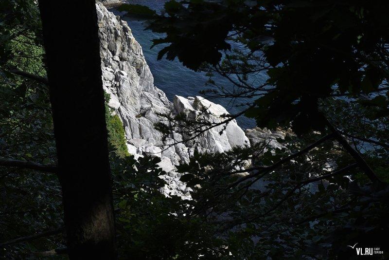 Приморский край- остров Петрова, Тисовая роща Приморский край, Тисовая роща, остров Петрова, россия