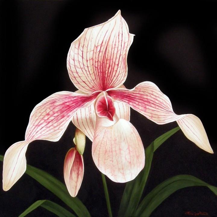 Орхидеи.