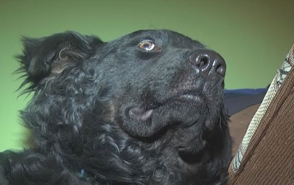 """В Нижнекамске собаку """"усыпил"""" специалист. А на утро похороненный пёс сидел у подъезда! И это – не конец веселья…"""