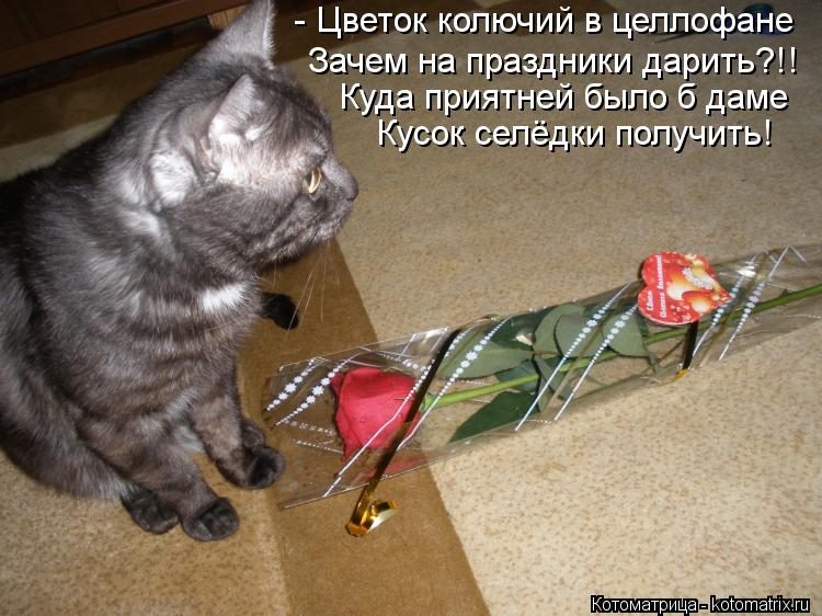 Котоматрица: - Цветок колючий в целлофане Зачем на праздники дарить?!! Куда приятней было б даме Кусок селёдки получить!