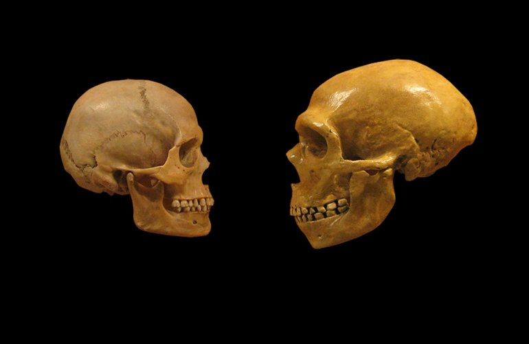 Люди принесли из Африки болезни — и заразили неандертальцев