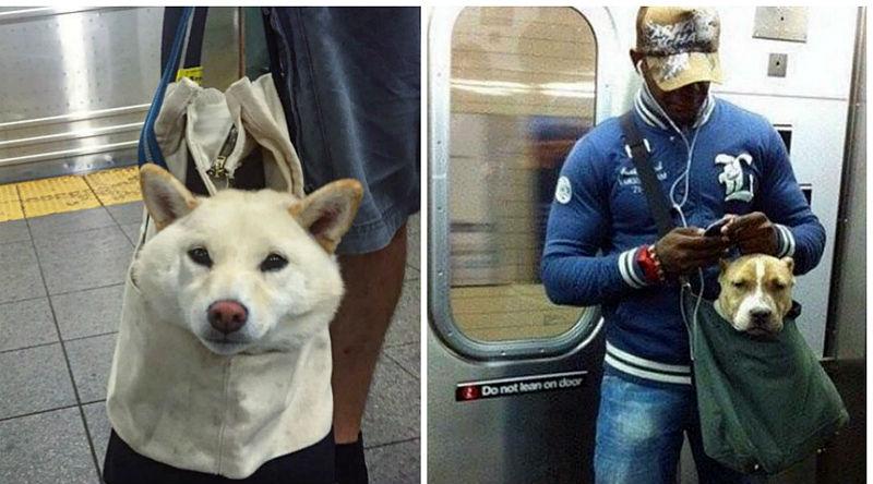 Как жители Нью-Йорка провозят животных в метро несмотря на запрет