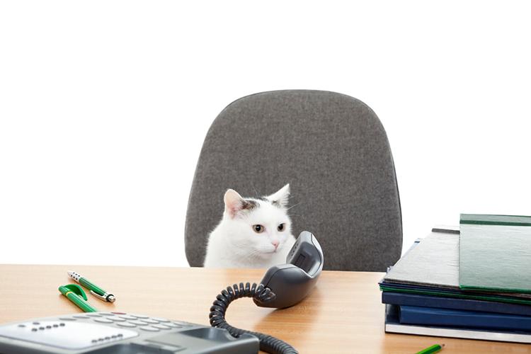 Кошка в офисе
