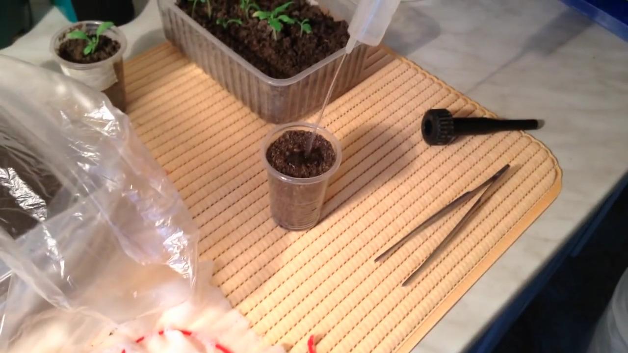 Этот способ выращивания рассады проверен временем и мной...