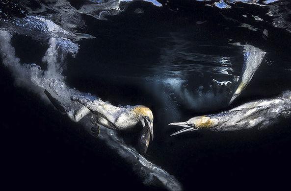 Объявлены победители конкурса на лучшее фото подводного мира