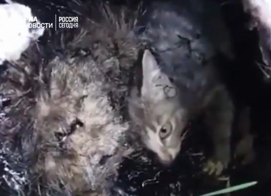 Когда живодёры бросили котят в гудрон, он был ещё горячий