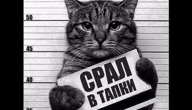 Грешная наивность Петра Павленского