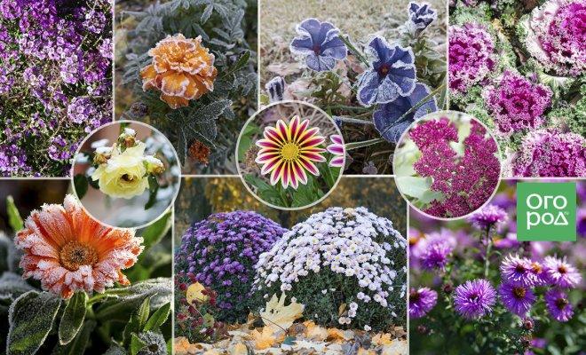 : ноябрьские цветы