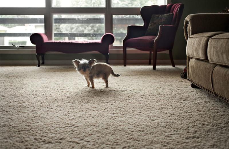 Гасси Сью (15 лет) собаки, фото собак, фотографии животных