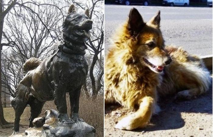 Собаки, которые всю жизнь были преданы людям.