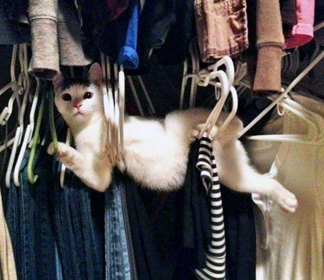 у каждого кота есть