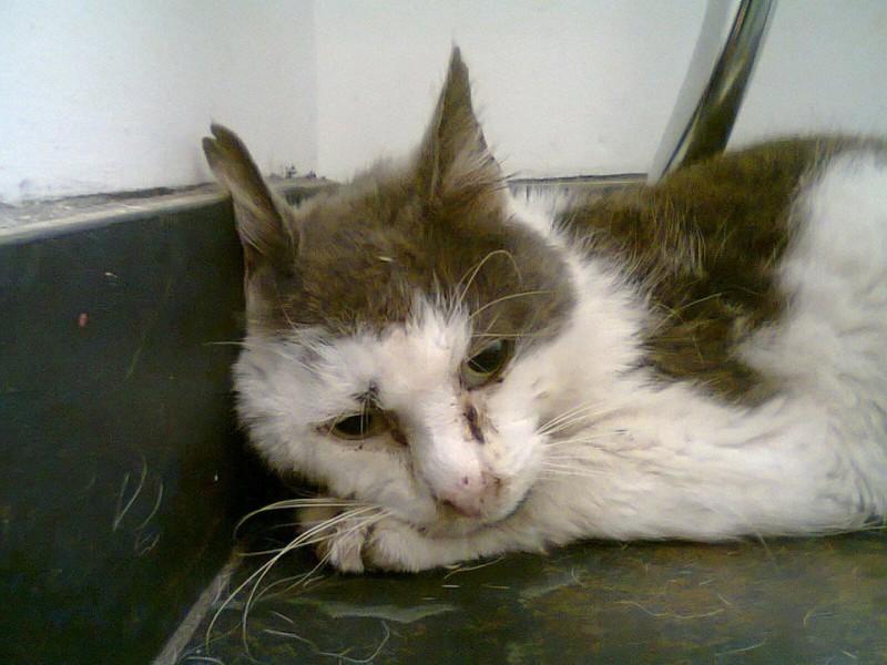 Этот кот 11 лет прожил на ул…